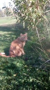 Fun in the Sun… Rusty relaxes after hunting a pest in the underbrush. Photo-by Darth Syth
